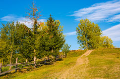 Tree on a hillside behind the fence Stock Images