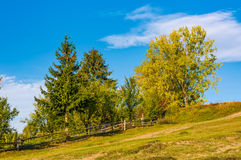Tree on a hillside behind the fence. Beautiful countryside scenery in early autumn Stock Images