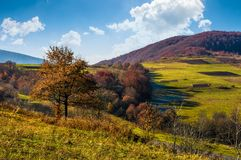 Tree on hillside in late autumn countryside Royalty Free Stock Image
