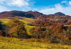 Tree on hillside in late autumn countryside Stock Images