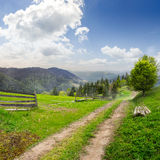 Tree on hillside path through  meadow in foggy mountain Stock Image