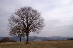 Tree on a hilltop Stock Photo
