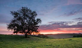 Tree on a hilltop with sunset sky background Royalty Free Stock Photo