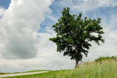Tree on Hilltop under a Cloudy Sky. A lone tree standing on a hilltop under a cloudy sky Royalty Free Stock Image