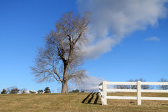 Tree on a hilltop. In wintertime next to white fence Stock Photography
