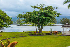 The tree in Hilo garden, Big Island Stock Photography