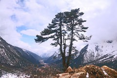 Tree in the Himalayas Royalty Free Stock Photos