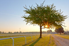 Tree on a Hippodrome Stock Photo