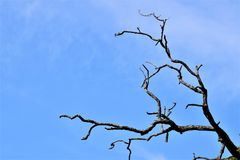 Tree. At his last stage Royalty Free Stock Images
