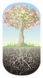 Tree and his roots. Blooming tree, his roots are as deep as high tree is Vector Illustration