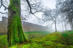 The Tree and Historic Ancient Rome Castle in a Foggy Misty Day. Photo stock images