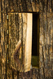 Tree hive Stock Images