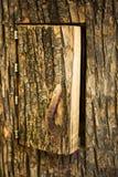 Tree hive Royalty Free Stock Photos