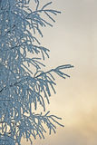 Tree with hoar frost Stock Images