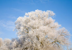 Tree in hoar frost Stock Photos