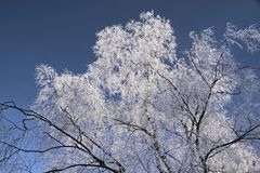 Tree with hoar frost Stock Photography