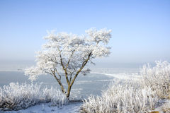 Tree in hoarfrost Stock Images
