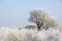 Tree in hoarfrost Stock Photo