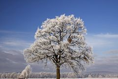 Tree with hoarfrost, Bad Laer, Germany Royalty Free Stock Images
