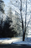 Tree with hoarfrost on the branches near a dirt road Stock Photography