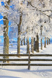 Tree with hoarfrost Royalty Free Stock Images