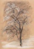 Tree in hoarfrost Royalty Free Stock Photo