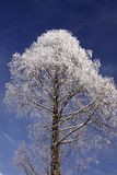 Tree with hoarfrost in winter Stock Image