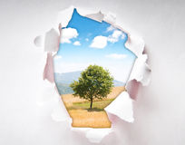 Tree through hole in paper. Lonely tree through hole in paper Royalty Free Stock Photography