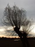 Tree in holland Stock Image