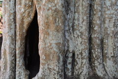 Tree hollow Royalty Free Stock Images