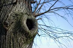 Tree hollow Stock Photos