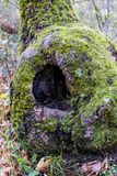 Tree hollow in a forest Stock Image