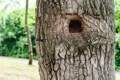 Tree hollow Royalty Free Stock Photography