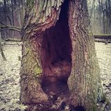 Tree hollow in a wood in spring Stock Image