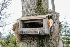 A view of feeder/ nesting box with little bird in a forest in winter day in Latvia stock photos