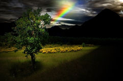 Tree of hope in darkness Stock Photo