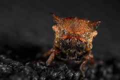 Tree hopper face Stock Images