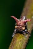 Tree Hopper Royalty Free Stock Photo