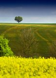 Tree on the horizon. Intersecting the second of a three-layered natural view.  Focus on tree Royalty Free Stock Photo