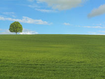 Tree on Horizon. Tree against Blue Sky on horizon with Green Fields in foreground Royalty Free Stock Photo