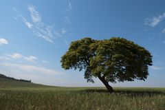 Tree horizon lonely landscape sky solitude. Blue green shadow plant scenic photography field rural Stock Images