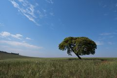 Tree horizon lonely landscape sky solitude field. Tree horizon lonely landscape sky solitude blue green shadow plant scenic photography field rural Stock Photo