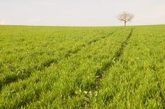 Tree at the horizont Stock Photos