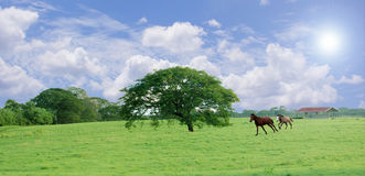 Tree and horses Royalty Free Stock Photos