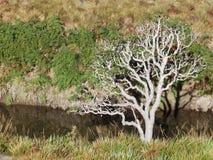 Tree. Sri Lanka. Tree in Horton Plains National Park. Sri Lanka Stock Image