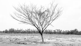 Dry Tree in summer season Stock Photography