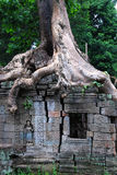 Tree House. A tree growing on top of an ancient ANgkor Temple. The entire temple complex was swallowed by the jungle Stock Images