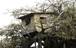 Tree house. Wood house on the tree Stock Photos