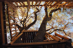 Tree House. Rails of a Tree House from Below Royalty Free Stock Photo