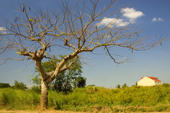 Tree & House. House in farmland, Cavite, Philippines Stock Photos